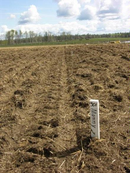 Corky   Plot with stake