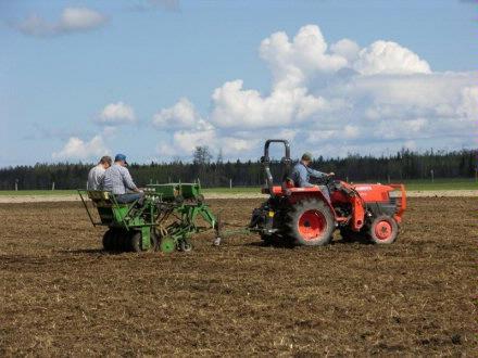 Corky   Seeding plot 2