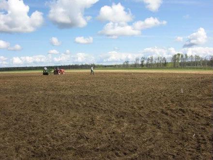 Corky   Seeding plot 3