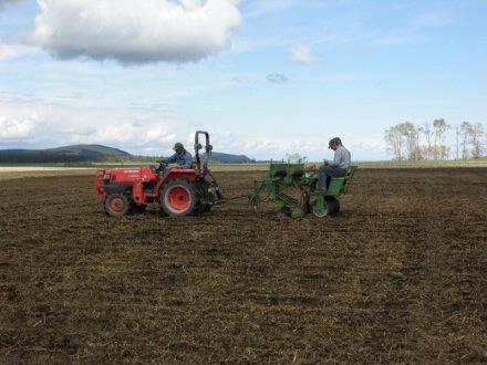 Corky   Seeding plot 4
