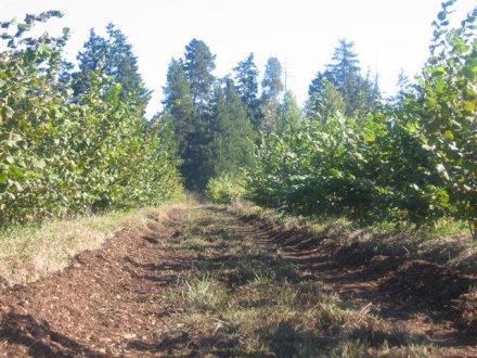 Duckett Truffierer plantation 2007