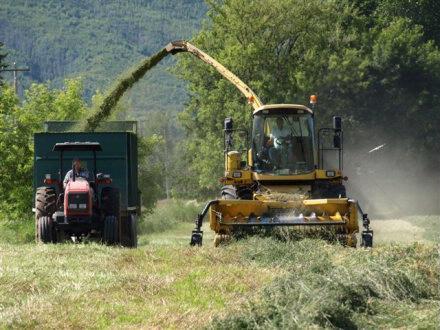 Harvesting Silage Admeier Farms 1