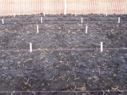 Seeding Oct2007 1