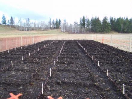 Seeding Oct2007 2