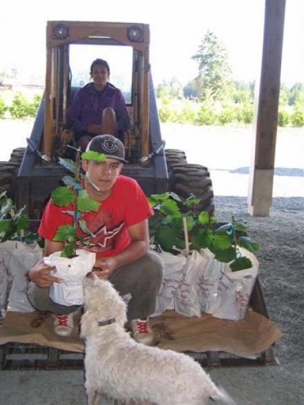 Seedling trees being delivered