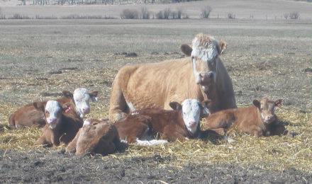 Sleeping Beauties   Spring 2005