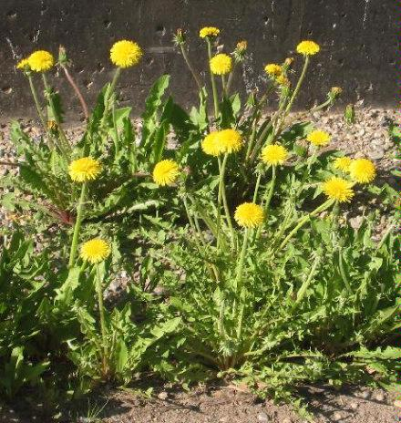 Spring flowers 2005