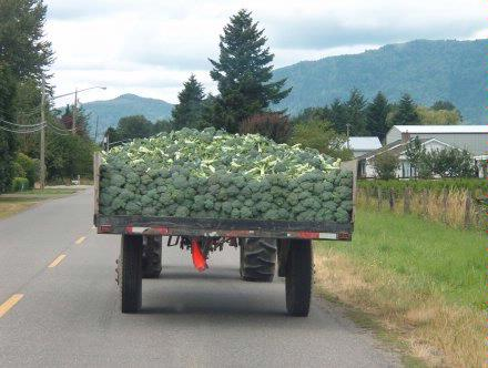 Truck brussel sprouts