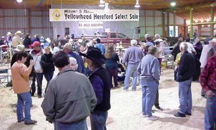 Yellowhead sale crowd 3