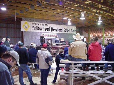 Yellowhead saleopening remarks