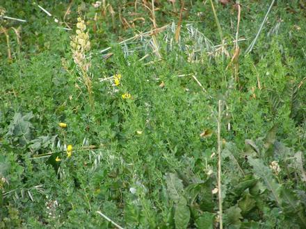 garden 2010 5