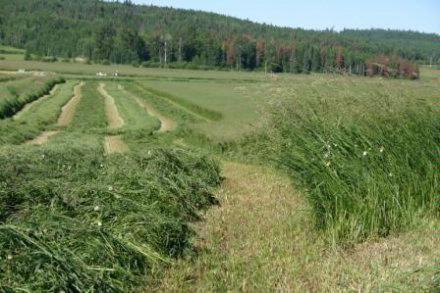 hay mix June 2006