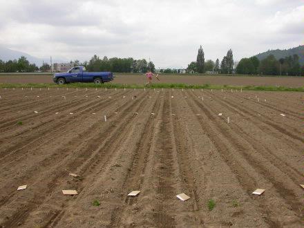 planting 15