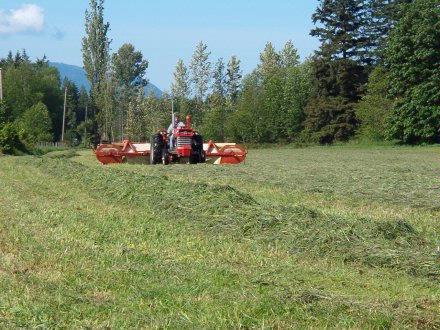raking hay 3