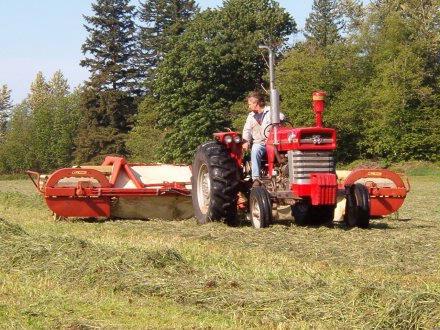 raking hay 4