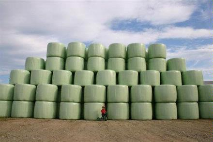 silage bales DougHatfield